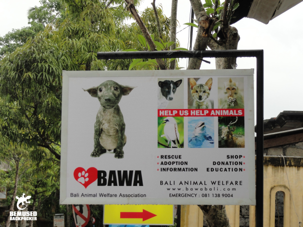 Gap year volunteering in Bali with BAWA