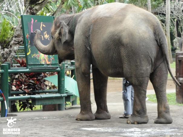 Elephant conservation and exploitation
