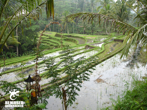 Bali rice terrace in the rainy season