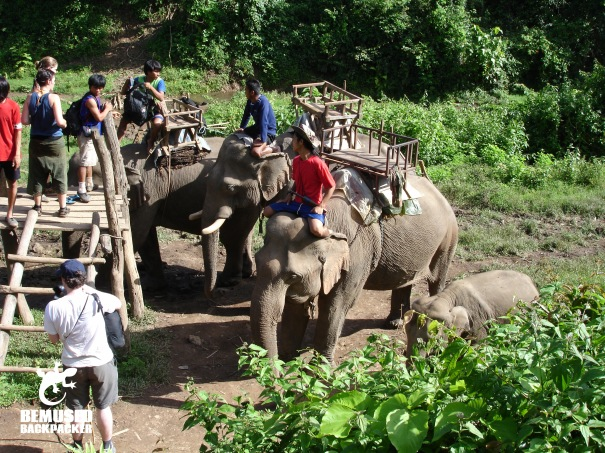 Shouldn't ride elephants in Thailand