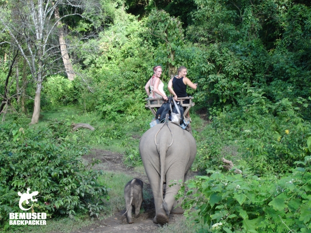 Elephant trekking, elephant riding, irresponsible tourism