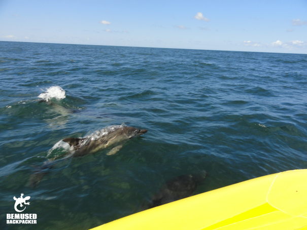 Responsible dolphin spotting on the Gower coast, Swansea Wales