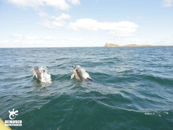 dolphin spotting, responsible tourism Gower coast, Wales