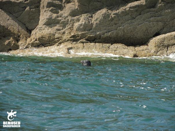 Responsible wildlife spotting Gower Coast Wales