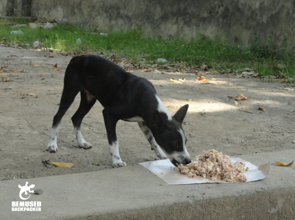 BAWA street feeding team Bali heritage dog
