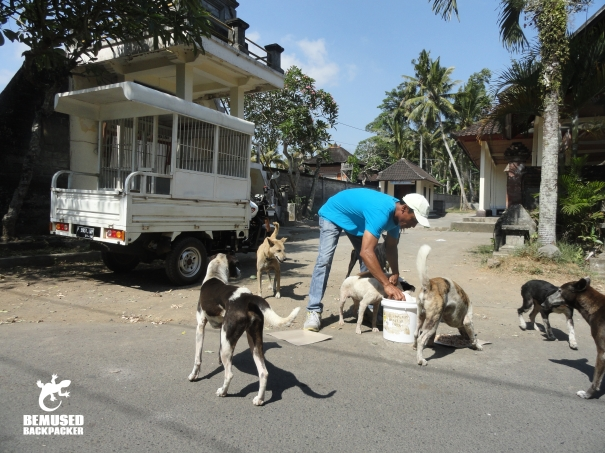 BAWA BALI street feeding team