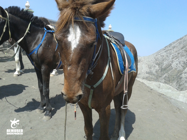 riding horses Mount Bromo Indonesia responsible tourism