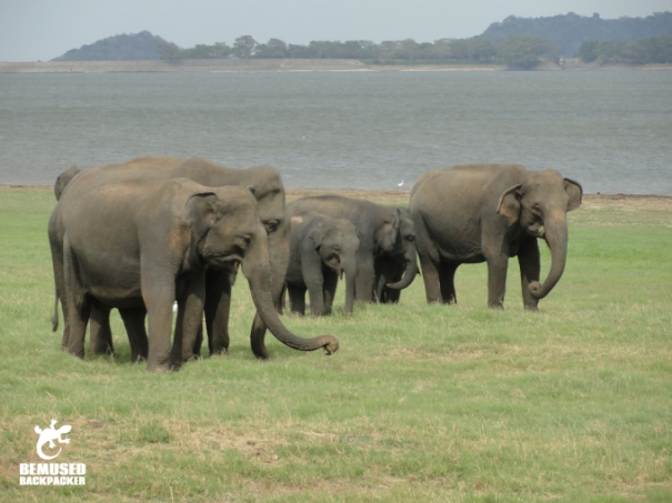 Elephant Safari Responsible Tourism Minneriya National Park Sri Lanka