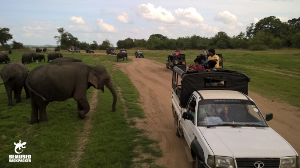 Irresponsible Jeep Safari at the Elephant Gathering at Minneriya National Park Sri Lanka