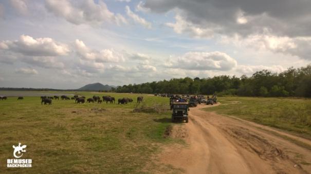 Irresponsible Tourism Crowded Jeep Safari at the Elephant Gathering at Minneriya National Park Sri Lanka