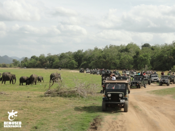 Jeep Safari at the Elephant Gathering at Minneriya National Park Sri Lanka Irresponsible Tourism