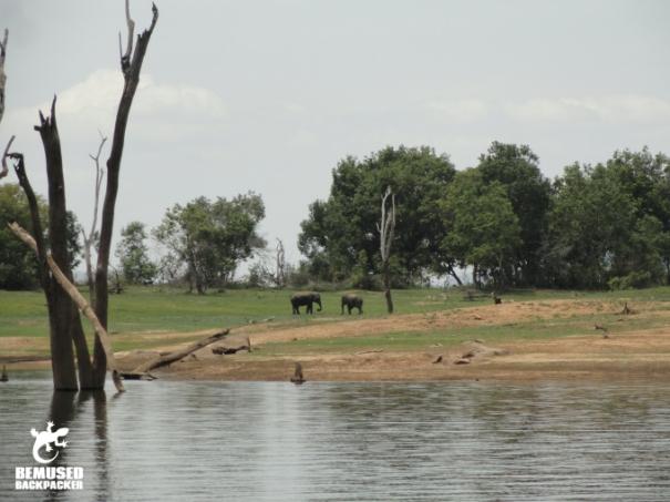 Elephant Safari Responsible Tourism Gal Oya National Park Sri Lanka