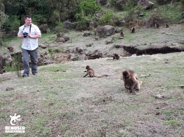 Michael Huxley Monkeys in Simien National Park Ethiopia