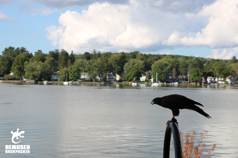 Finger Lakes New York Hawk on Lake