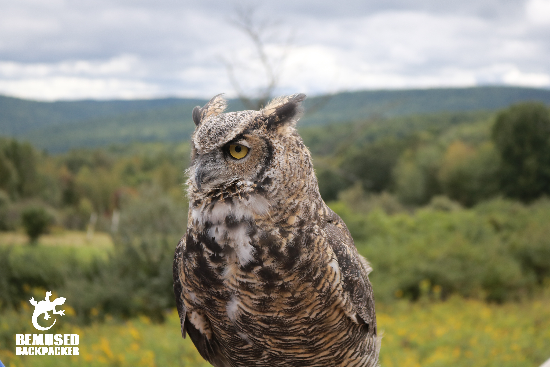 Tanglewood Nature Center in Finger Lakes New York Volunteering