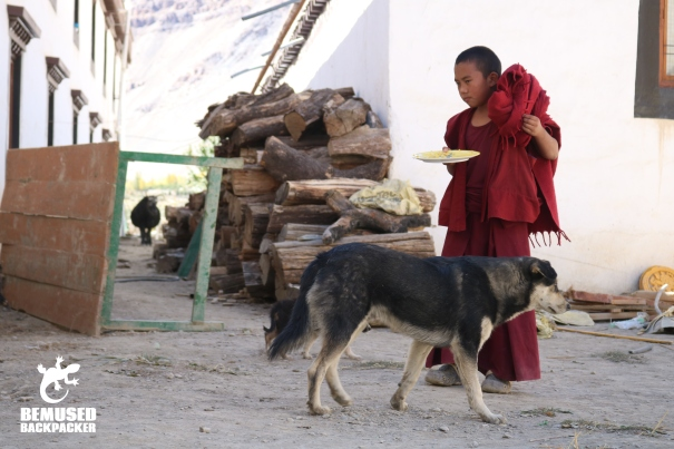 Himalaya Road Trip Buddhist Monk with Dog