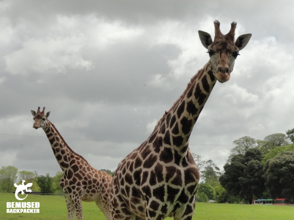 FOTA wildlife park Cork Ireland