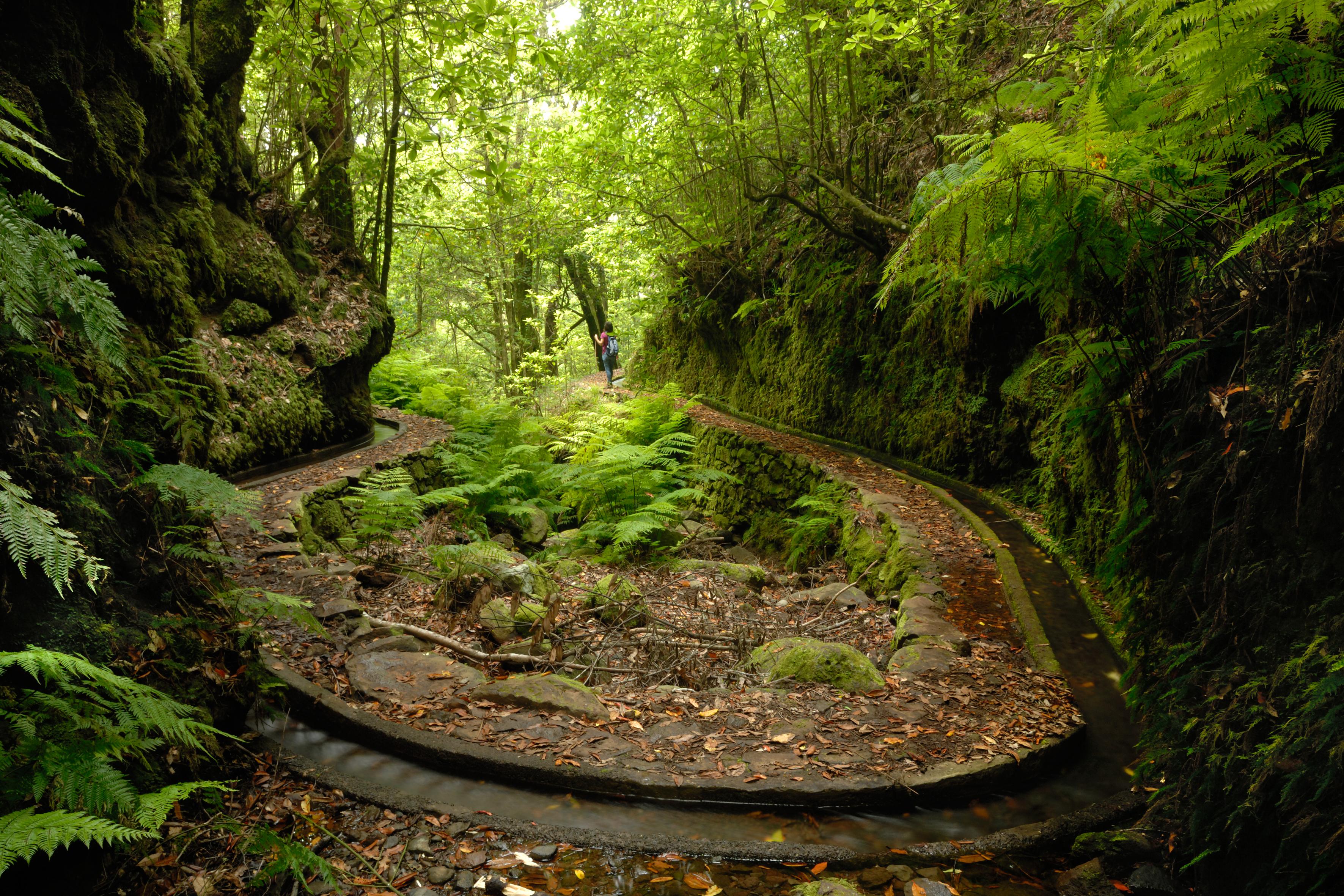 Hiking Madeira's Iconic Levada Walks.